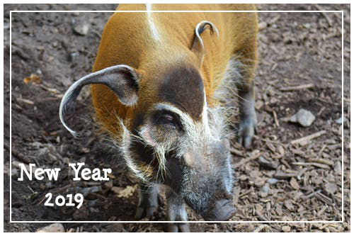 new year 2019 blog banner year of the pig